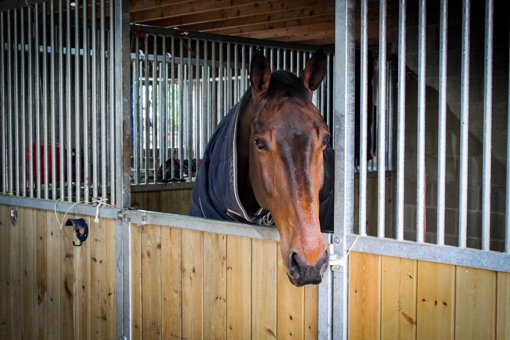 A horse at Highnam Court Equine